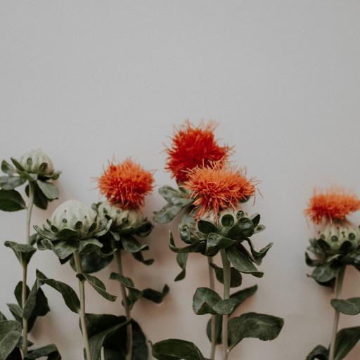 鲜花 红花 红色 鲜艳