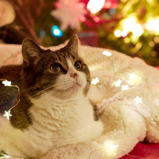 猫咪 可爱 宠物 彩灯