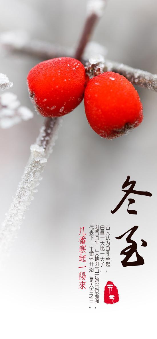 冬至 二十四节气 传统 果实