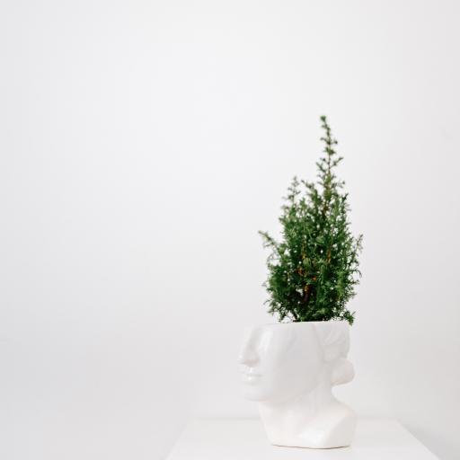 绿植 盆栽 花盆 观赏