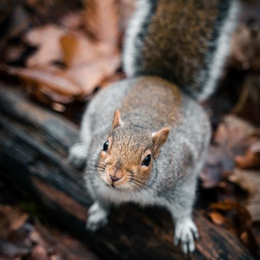 郊外 树干 松鼠 可爱