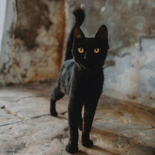 喵星人 黑猫 猫咪