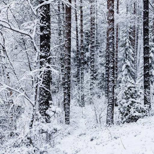 冬季 美景 树林 白雪覆盖