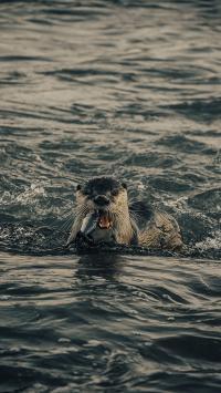 海狮 海水 捕食 海洋