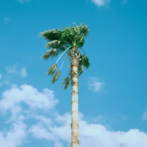 树木 天空 蔚蓝 椰树