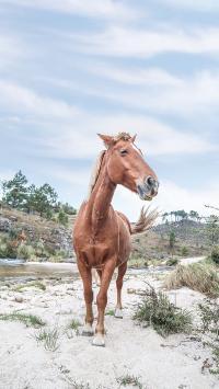 马 驹 鬃毛 山林