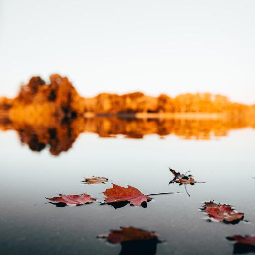 郊外 湖泊 落叶 枫叶 美景