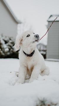 宠物狗 汪星人 雪地 白色