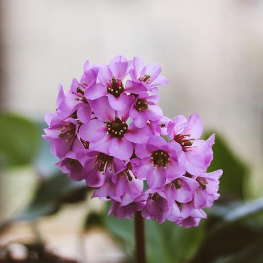 鲜花 盛开 花簇 花季
