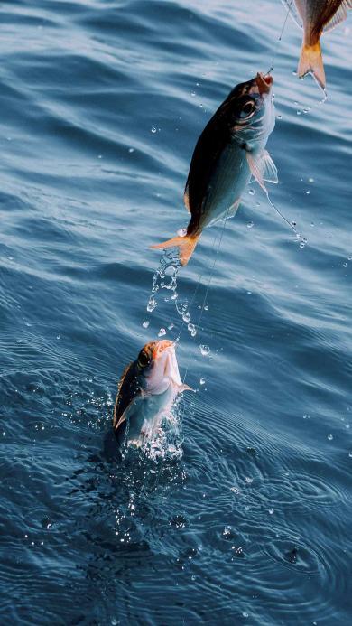 钓鱼 鱼钩 大海 海洋