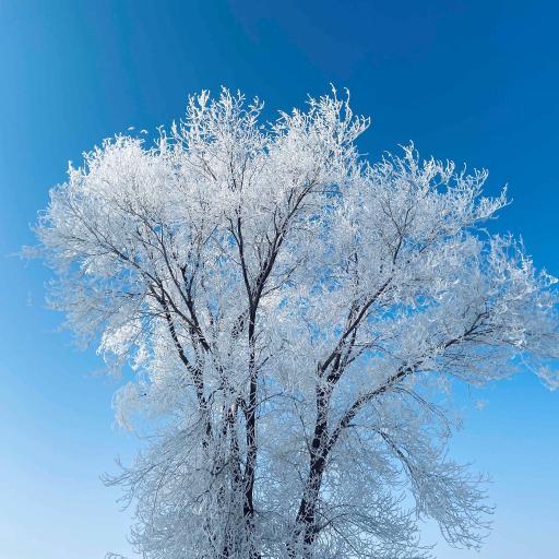 雾凇 天空 蔚蓝 树木 冰晶