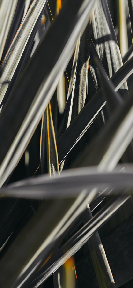 植株 葉子 綠化 護眼