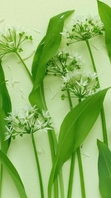 鮮花 枝葉 鮮葉 綠葉