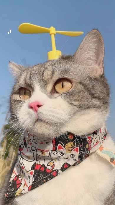 可爱 竹蜻蜓 猫咪 宠物
