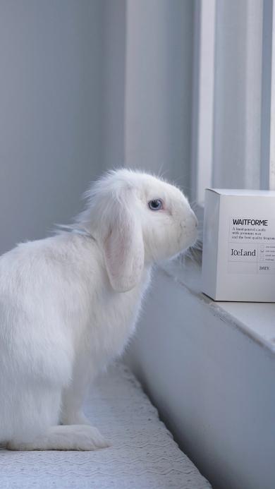 兔子 毛茸茸 可愛 寵物 白色