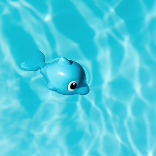 玩具 蓝色 海豚 水 泳池