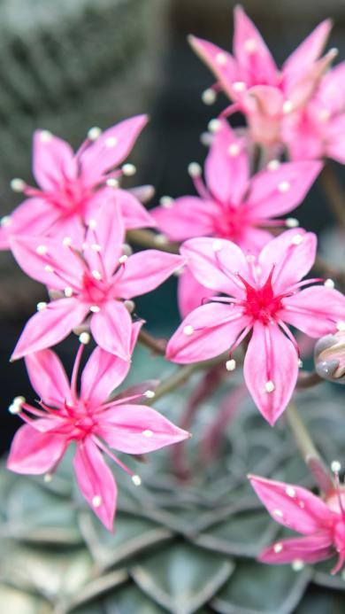鮮花 花朵 花簇 小花