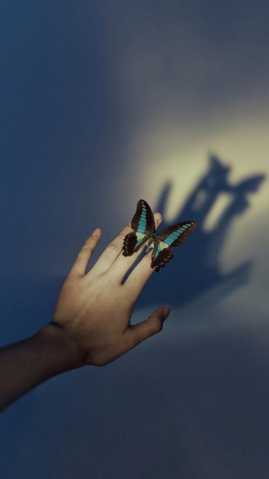 蝴蝶 手 影子 翅膀 昆蟲