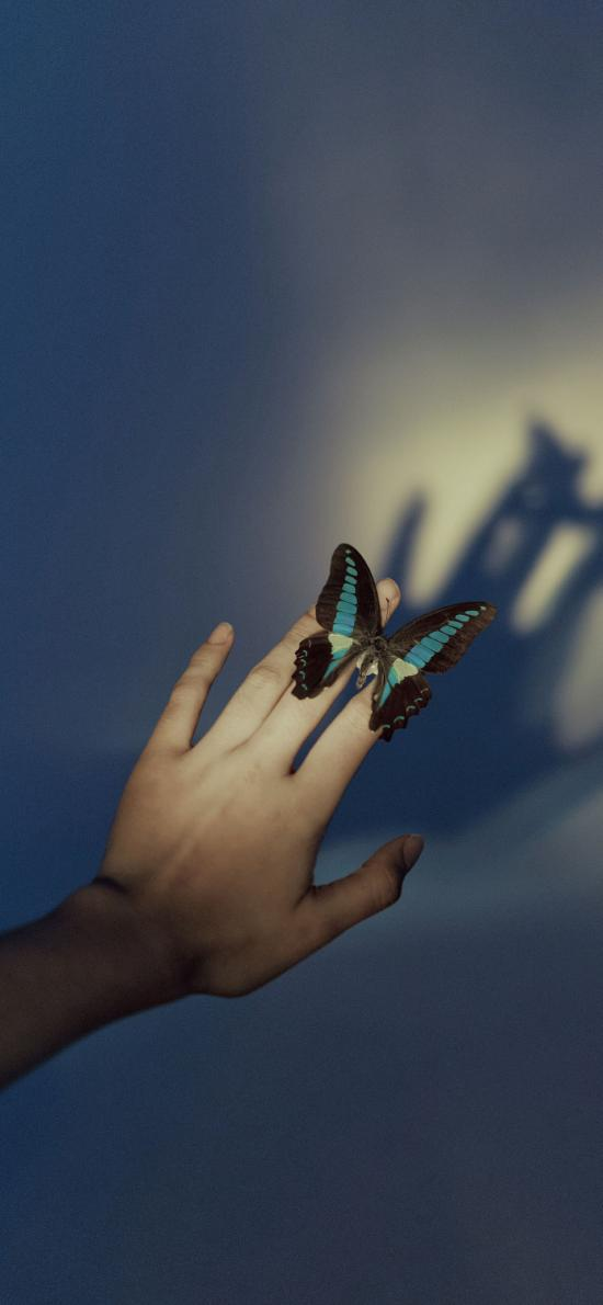 蝴蝶 手 影子 翅膀 昆虫