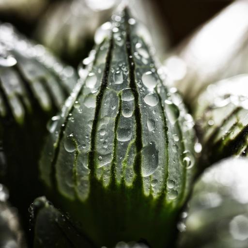 绿植 多肉植物 冰露 水珠(取自站酷网:又哑又聋)