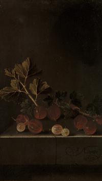 红醋栗 果实 颗粒 枝叶