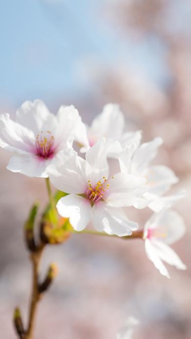 鮮花 花朵 盛開 花季