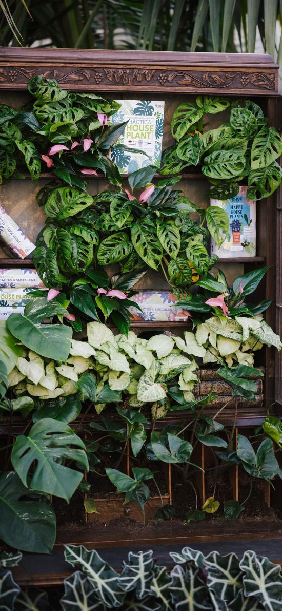 綠植 木架 龜背竹 種植