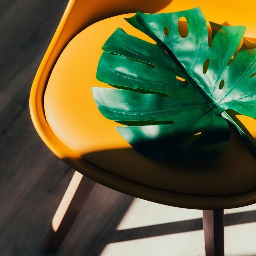 龟背竹 绿叶 枝叶 椅子