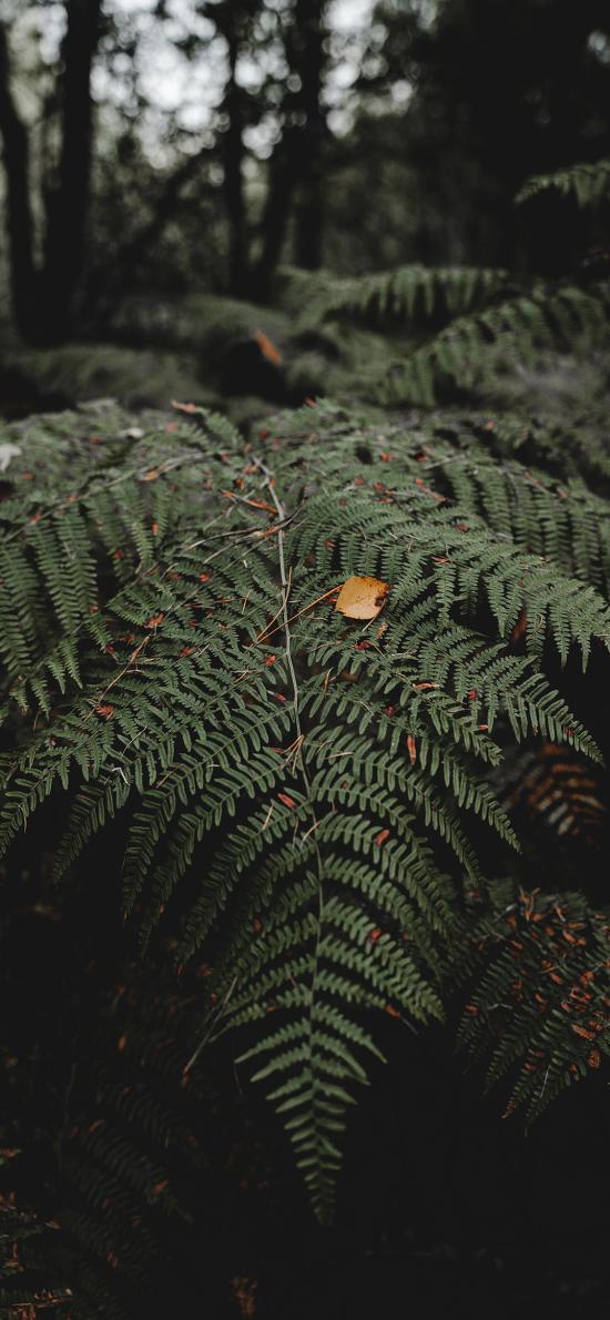 叶子 绿色 植被 蕨类