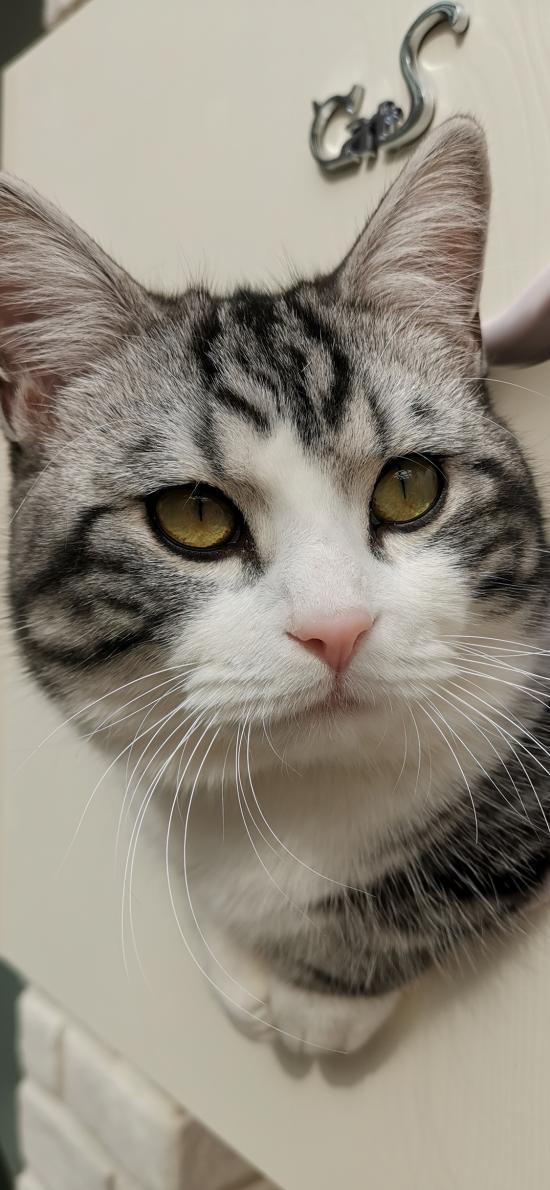 猫咪 喵星人 宠物 可爱