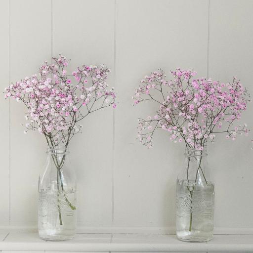 花瓶 插花 粉色 小清新