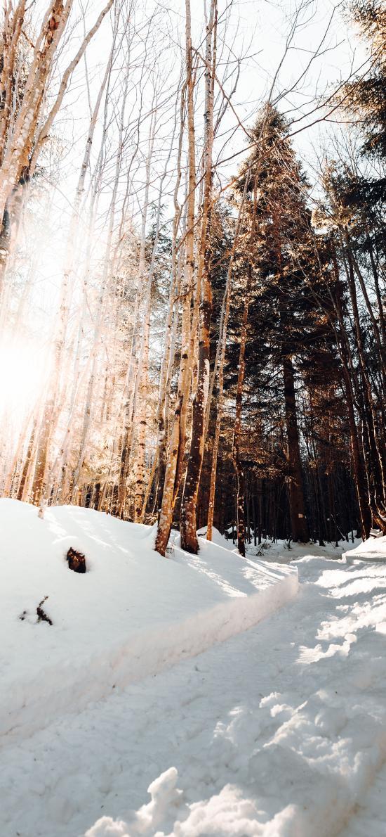 雪地 風景 樹木 陽光 冬季
