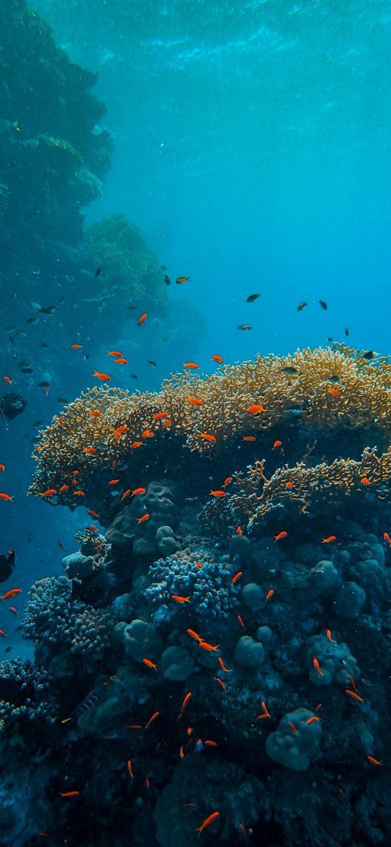 珊瑚 海洋 海底 鱼群