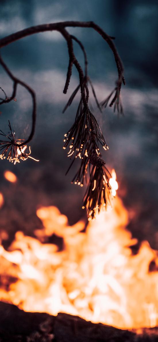 松針 樹枝 火焰 燃燒