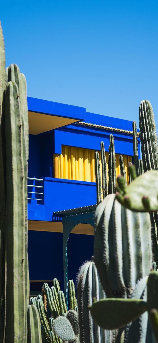 樓房 房屋 藍色 仙人掌 熱帶