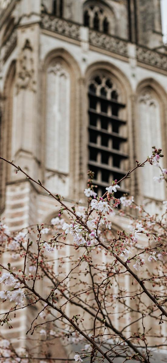 樹木 櫻花 粉色 建筑