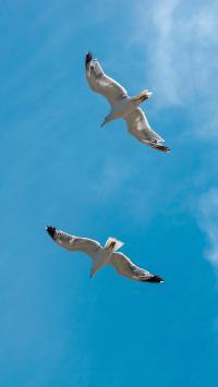 飞鸟 天空 鸟类 飞翔