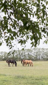 马 畜牧 草坪 驹 绿色