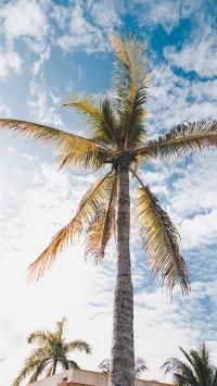 椰树 天空 蔚蓝 云朵