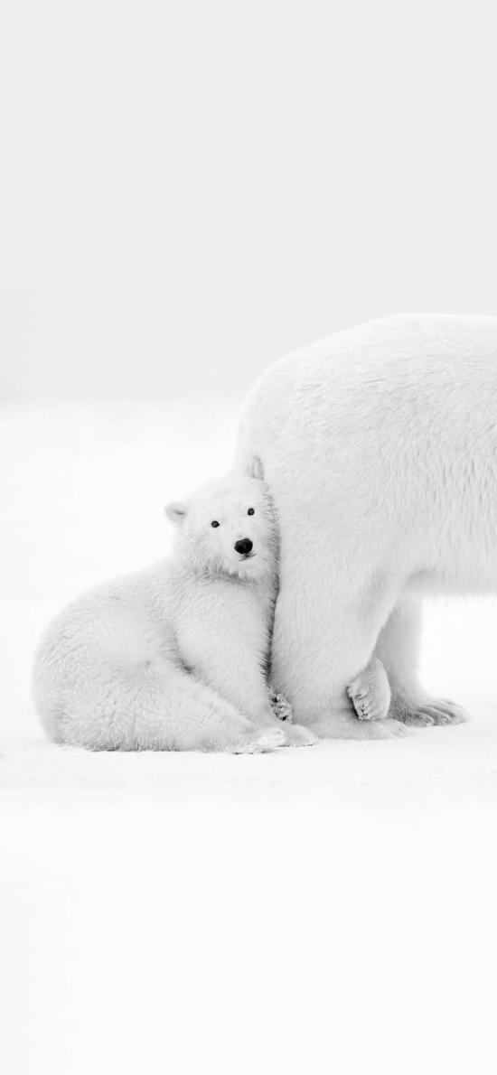 北極熊 雪地 白色 萌 可愛