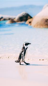 企鹅 海边 沙滩 行走 萌