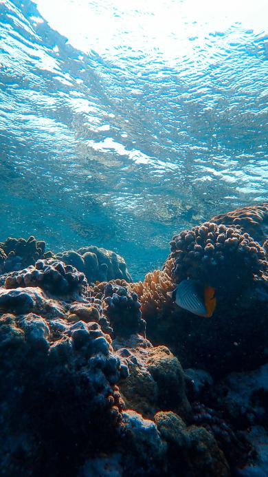 海洋 大海 珊瑚礁 海水