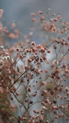 鲜花 满天星 粉色 清新