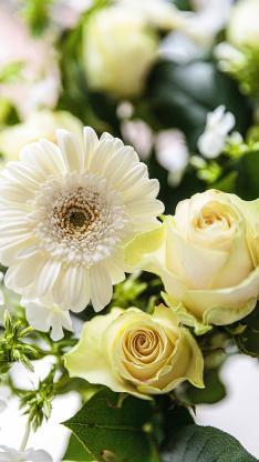 鲜花 花季 盛开 花朵 玫瑰 菊花