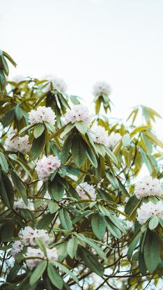 树木 枝叶 茂密 鲜花