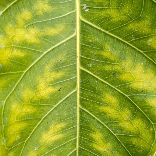 绿叶 枝叶 叶脉 树叶