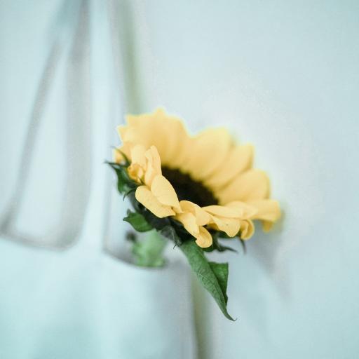 向日葵 鲜花 帆布包 叶子