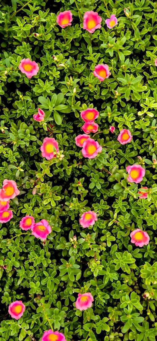 花丛 草丛 花朵 密集