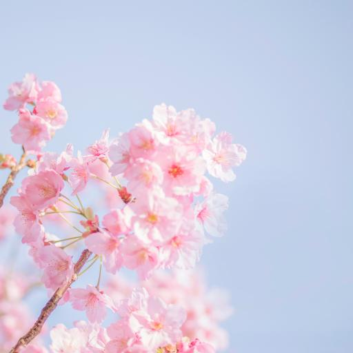 鮮花 盛開 花季 春天 天空