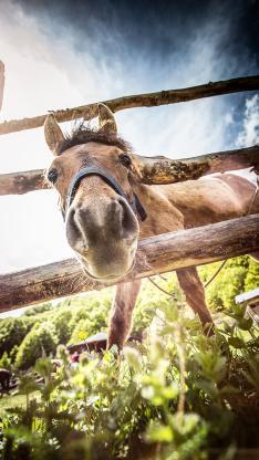 飼養 馬 柵欄 草地 牲畜
